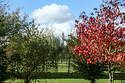 The Armed Forces Memorial through the trees at the National Memorial Arboretum, Croxall Road, Alrewas, Burton-On-Trent,  Staffordshire, on 29 October 2018. Picture by Mick Haynes.
