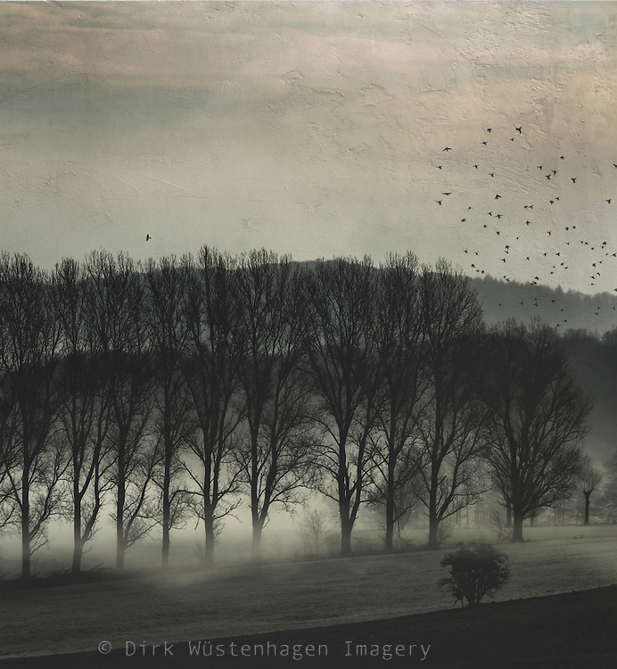 Fields and trees on a misty winter morning - textured photograph