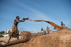 Every morning during the dry season, the Samburu warriors bring their cattle to dry river beds where they have dug wells. They sing as they lift the buckets of water from the deep wells  and each warrior's cattle knows which well is theirs based on the sound of the songs. (Photo by Ami Vitale)