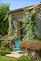 A lonely blue chair outside a house surrounded by plants