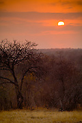 Sunrise over the veldt, Kirkman's Kamp, Sabi Sands Private Game Reserve, Sabi Sabi, South Africa