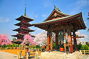 The Gojunoto Temple and five storied pagoda and bell house in Hirosaki northern Japan. It is spring time and surrounded with beautiful cherry blossoms and buddhist statues.