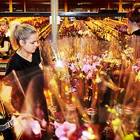Nederland, Markapelle, 3 juni 2016<br /> de grootste orchideenkwekerij ter wereld (familiebedrijf van 5 broers waaronder de CEO, CFO komt van buiten.<br /> Op de foto: Martin Smaal CEO<br /> Rob de Rooij CFO <br /> Op de foto: werknemers van Sonatural bezig met het sorteren van de orchideen.<br /> <br /> <br /> Foto: Jean-Pierre Jans