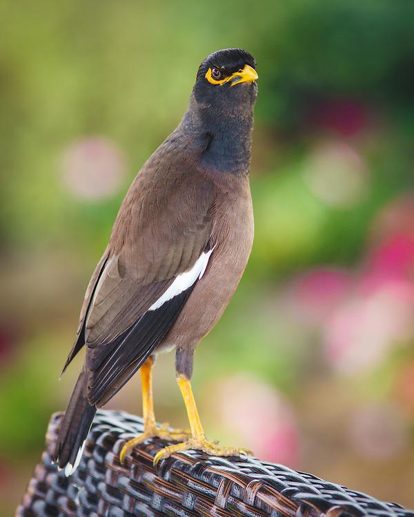 """Dubai """"Wildlife"""" :)"""