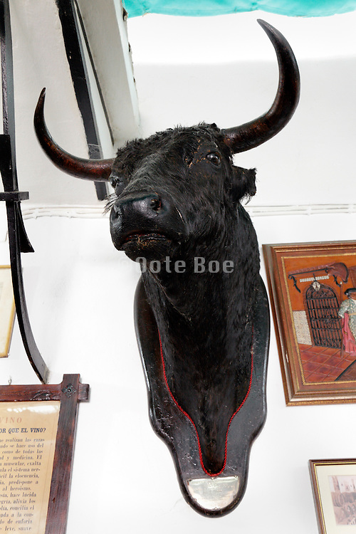 stuffed bull head hanging with other trophies on a wall Spain