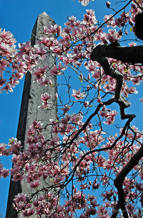 Egyptian Obelisk with blossoms