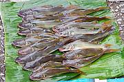 Laos. Luang Prabang. Morning market. Fish.