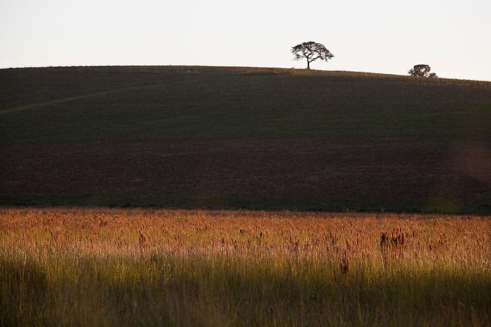 Monsenhor Paulo_MG, Brasil...Paisagem rural em Monsenhor Paulo...The rural landscape in Monsenhor Paulo...Foto: LEO DRUMOND / NITRO.....