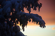 2016-02-15 - Medford/Somerville, MA - Snow coats the trees at sunset on Powderhouse Boulevard outside Latin Way on Friday, Feb 5th, 2016. (Ray Bernoff/The Tufts Daily)