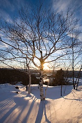 Late day sun and paper birch trees on Mount Holyoke in Hadley, Massachusetts.  Skinner State Park.