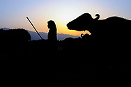 Bashi tends the herd at sunrise, along the Asan River.