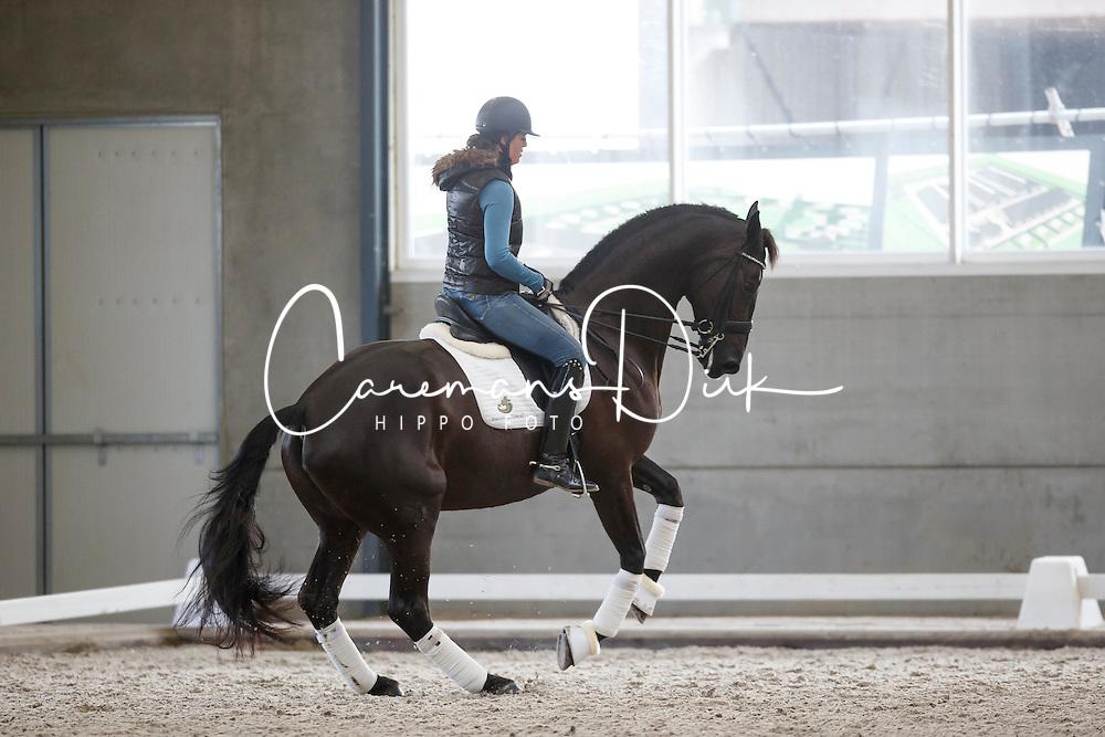 Filion Dominique, (NED), Winicienta<br /> Selevia Hoeve - Werkendam 2015<br /> &copy; Hippo Foto - Dirk Caremans<br /> 18/11/15