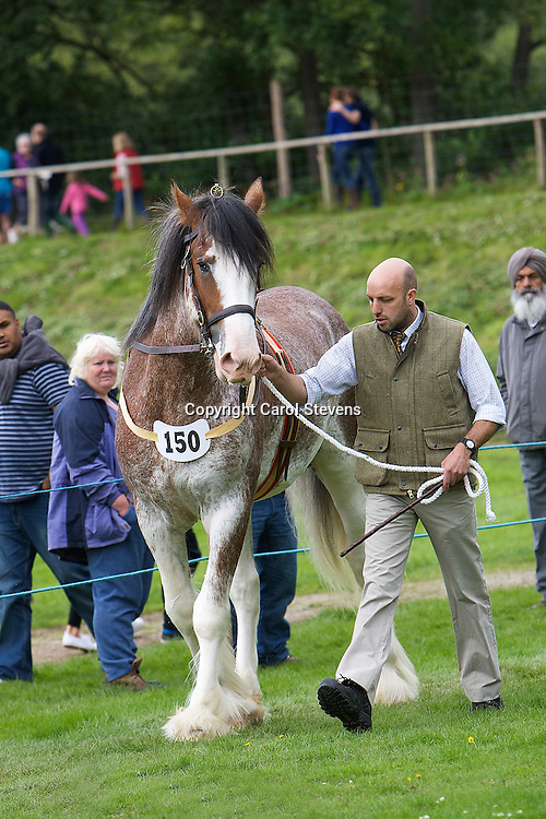 Heavy Horse Showing Classes at Ripley Show 2011