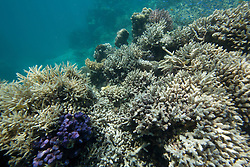 "Coral bleaching at ""The Aquarium"", in Clerke Lagoon at the Rowley Shoals."