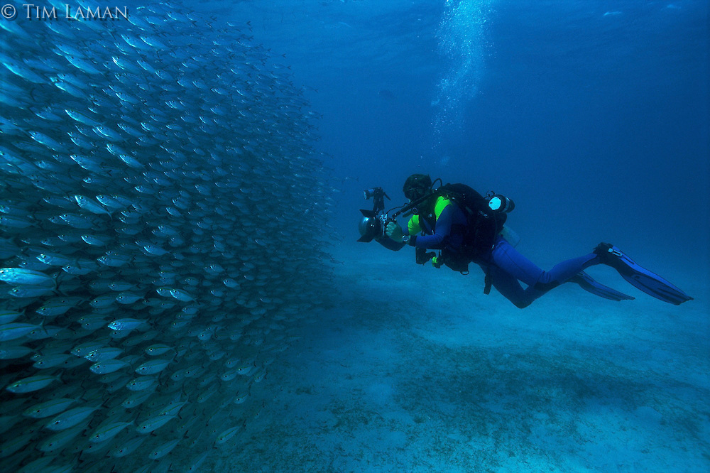 Photographer Tim Laman, on assignment, by a school of smooth-tail trevally (Selaroides leptolepis)..Dimakya Island, Palawan, Philippines.  Oct 01.