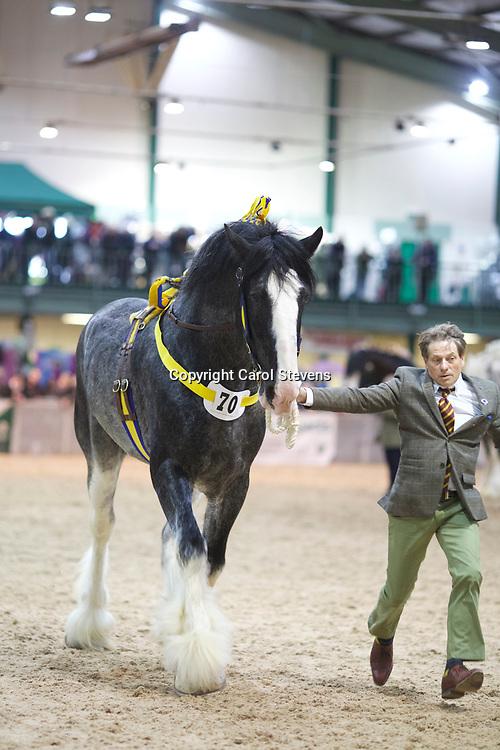 William Bedford's HILLMOOR DOUBLE TROUBLE  f 2009 (No.70) <br /> Sire  Knutsford Edward the Second<br /> Dam  Hillmoor Duchess<br /> Breeder  Mr P E Moss<br /> 4th  Stallions  5 years &amp; upwards
