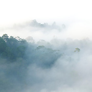Sea of Fog, Sea of Mist - the morning mist evaporating from the valley of the Phetchaburi river. A famous sight at Khao PanoenThung in Kaeng Krachan National Park, Thailand.