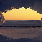 Emperor Penguin (Aptenodytes forsteri) rookery seen through a hole in a tabular ice berg. Atka Bay, Antarctica