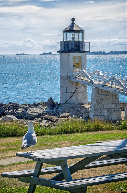 A partly sunny day by the Marshall Point Lighthouse in Port Clyde Maine with a Seagull occupying a picnic table.