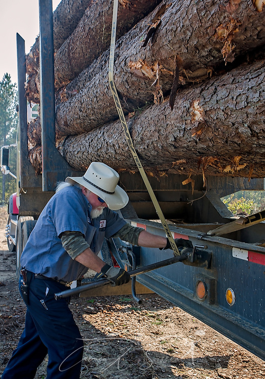 Tracy's Logging driver T.J. Branham tightens the straps on a load of loblolly pine, Nov. 16, 2016, in Steadham, S.C. The timber will be taken to a Georgia-Pacific plant. Photo by Carmen K. Sisson)