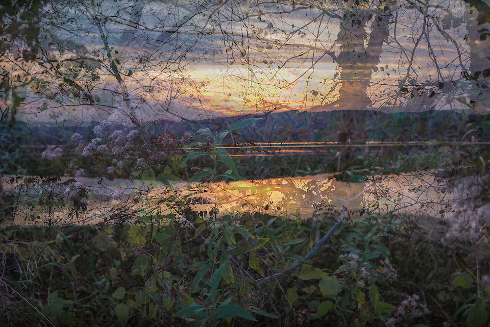 Landscape photograph, sunset multiple exposure of river, trees, and plants at Goose Island.