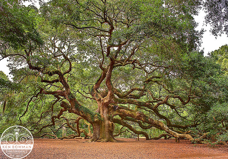 Angel Oak July shot.
