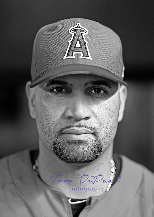 LA Angels Albert Pujols Poses for a portrait at Marlins Park.<br /> ( Photo/Tom DiPace)