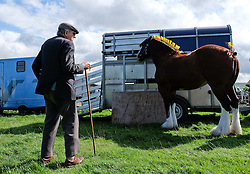 © Licensed to London News Pictures.26/08/15<br /> Egton, UK. <br /> <br /> A farmer stands next to a shire horse at the 126th Egton Show in North Yorkshire. <br /> <br /> Egton is one of the largest village shows in the country and is run by a band of voluntary helpers. <br /> <br /> This year the event featured wrought iron and farrier displays, a farmers market, plus horse, cattle, sheep, goat, ferret, fur and feather classes. There was also bee keeping, produce and handicrafts on display.<br /> <br /> Photo credit : Ian Forsyth/LNP