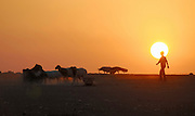 Israel, Negev desert, Bedouin shepherd and his sheep silhouette at sun set