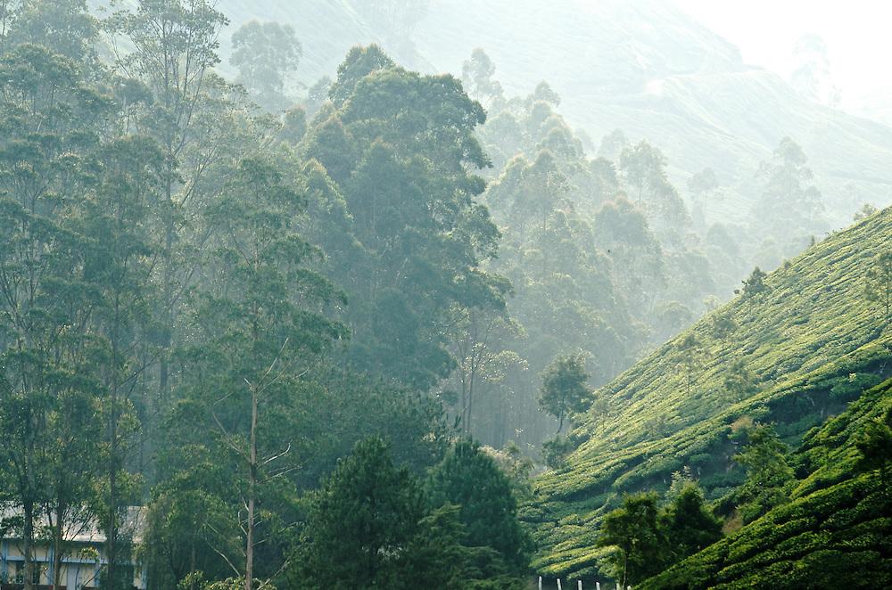 Munnar in Kerala, India