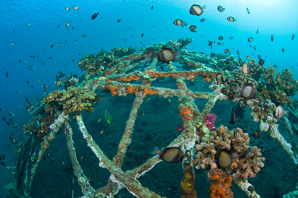 Metal dome or artificial reef anchored on the sea bottom in Tulamben, Bali, Indonesia to serve as a home for corals, sponges and marine animals.