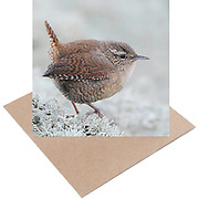 Eco Greeting Card Range