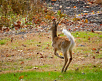 Shaggy cold young Doe. Image taken with a Fuji X-H1 camera and 200 mm f/2 OIS lens + 1.4x teleconverter (ISO 420, 280 mm, f/8, 1/420)