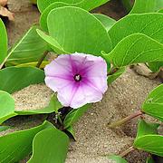 2006 Maui Vacation