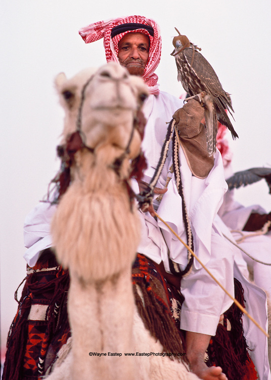 Falcon handler astride his dromedary camel at the ceremony preceding the Kings's Camel race at Jinayderiah, Saudi Arabia