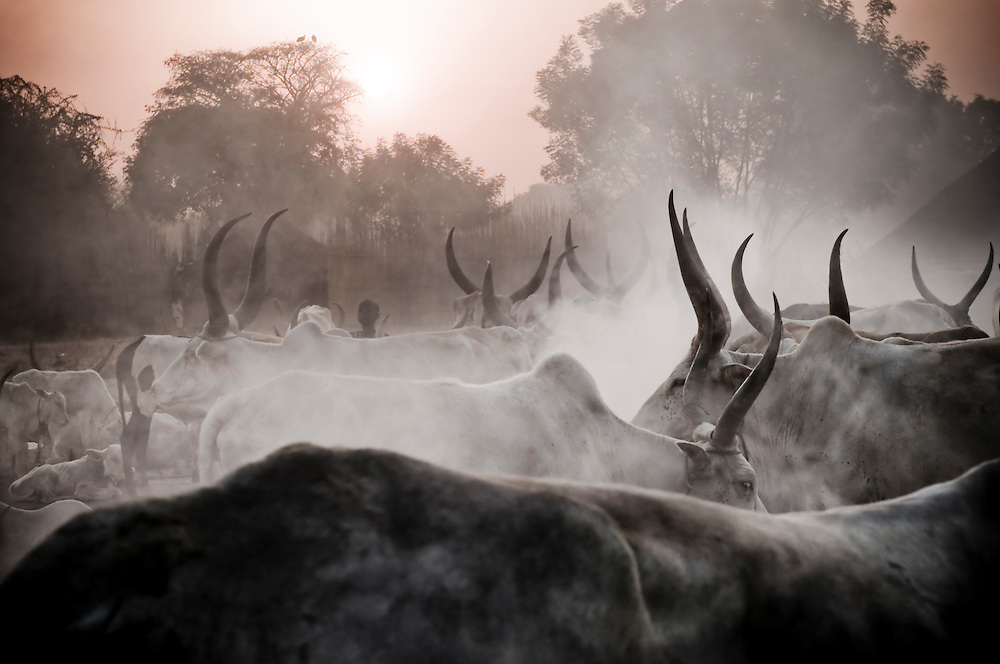 Nomadic Dinka pastoralists wake in the early hours to tend to their herd outside the SPLA/SPLM stronghold of Bor. Sudan recently voted on whether or not to remain with the North or to set out alone as the world's newest nation. (© William B. Plowman)