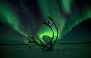 Light Antlers Aurora