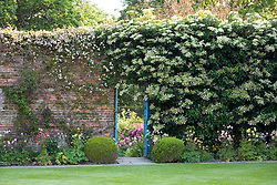 Door through wall into The Rose Garden at Sissinghurst Castle, clothed with Hydrangea petiolaris.