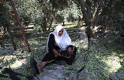 October 2, 2018 - Gaza City, Gaza Strip, Palestinian Territory - A Palestinian woman picks olives during harvest season at a farm in Gaza city. (Credit Image: © Mahmoud Naser/APA Images via ZUMA Wire)