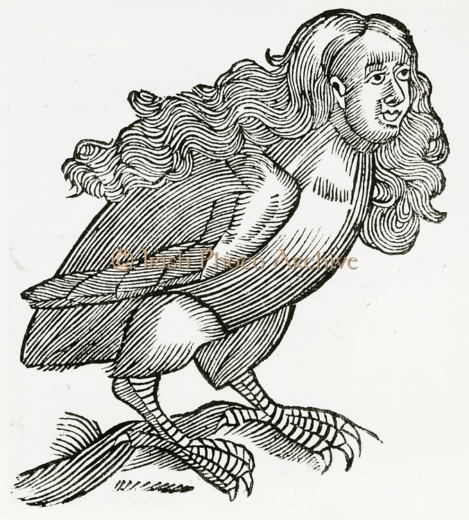 'In Greek mythology a Harpy was a filthy, stinking  monster with a woman's head and bird's body, contaminating everything it came near. Woodcut from a 1669 edition of ''Historiae animalium' 'by Conrad Gesner.'