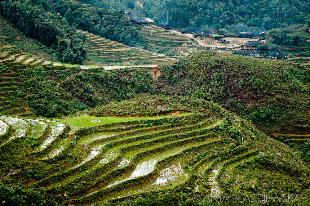 Vietnam, Sapa. Impressive rice terraces of the Northern Vietnam.