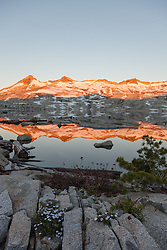 """Wildflowers at Lake Aloha 1"" - These Phlox flowers were photographed at sunrise at Lake Aloha in the Tahoe Desolation Wilderness."