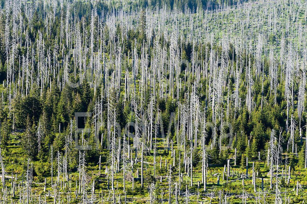 Toter Wald an der deutsch-tschechischen Grenze, Lusen, Nationalpark, Bayerischer Wald, Bayern, Deutschland | dead forest on German-Czech Border, Mt. Lusen, national park, Bavarian Forest, Bavaria, Germany