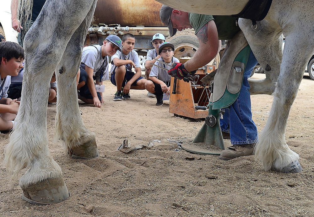 apl071217a/ASECTION/pierre-louis/JOURNAL/071217<br /> APD Junior Police Academy members watch farrier  Norman Michel ,, works on APD horse &quot;Rudy&quot; 's hoof during a demonstration held at the Bernalillo Sheriff's Posse Arena .Photographed on Wednesday July  12,  2017. .Adolphe Pierre-Louis/JOURNAL