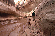 Walking where no one has for 30 years, Nicole Schmutz, from Salt Lake City, stands in awe of the Cathedral in the Desert formation inside Clear Creek Canyon,  a side canyon in Lake Powell.  Thought by many to be the most spectacular side canyon in the former Glen Canyon, it had a waterfall, lush vegetation and towering, curving walls that made one feel a spiritual presence was in the place.  Because the lake level has dropped nearly 90 feet much of the side canyon is being exposed and now allows for small boats to enter the narrow passageway.<br /> Saturday, March 15, 2003.