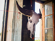 17 MARCH 2015 - BANGKOK, THAILAND: A water buffalo skull hanging in a hallway in the old Customs House in Bangkok. The old Customs House was once the financial gateway to Thailand (before 1932 called Siam). It was designed by an Italian architect in the 1880s. In the 1950s, customs moved to new, more modern building and the Customs House became the headquarters for the Marine firefighters. The firefighters now live in the decrepit buildings with their families.    PHOTO BY JACK KURTZ