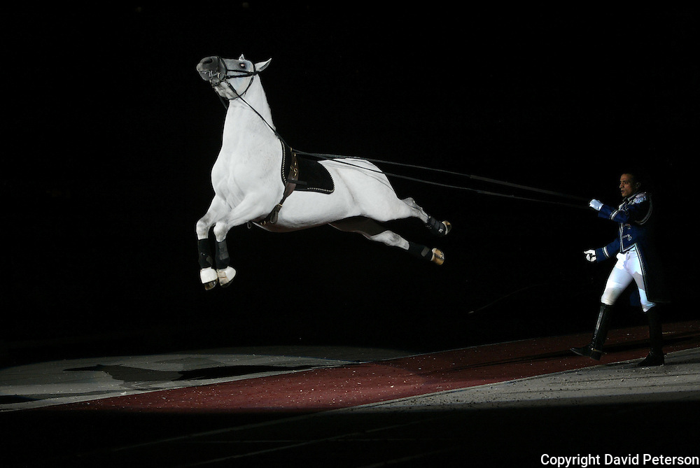 "A Lipizzaner  White Stallion seems suspended in air as it performs a jump during a show on their 37th Anniversary Tour in 2007. In 1970, Producer Gary Lashinsky created a new family arena attraction, starring The ""World Famous"" LIPIZZANER STALLIONS...Many horses and riders were brought from Europe to perform  for over twenty-three million people throughout North and South America, Great Britain, Europe, Australia and Hawaii have seen this internationally acclaimed spectacle.  ..choreography and music have been incorporated in this anniversary edition with a major emphasis on the historical background and foundation of the Lipizzaner breed, from its original breeding and use as a horse of war to a horse of nobility and aristocracy to a living form of equestrian art. The show emulates the Spanish Riding School of Vienna, Austria, in its presentation of Lipizzans, and maintains a traditional as well as entertaining performance similar in many ways to what you would see at the Spanish Riding School of Vienna...."