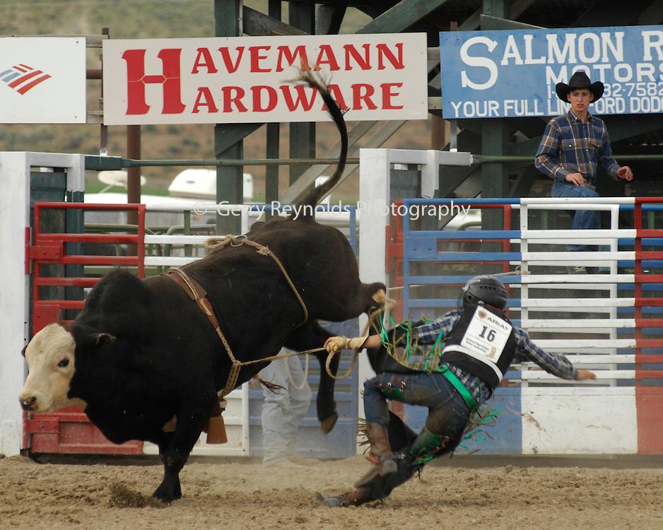 Bull Riding, Bucking Bull, Bull, Rodeo, Salmon, Idaho