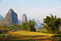 Chine, Province du Guangxi, region de Guilin, riziere et montagnes en forme de pains de sucre, region de Yangshuo // China, Guangxi province, Guilin, Karst Mountain Landscape and rice field around Yangshuo