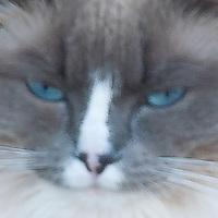 Closeup cat portrait with impressionist effect